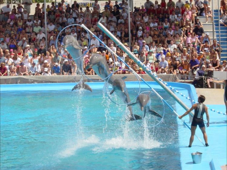 Delfiner, delfinshow, Marineland, Barnaktiviteter,