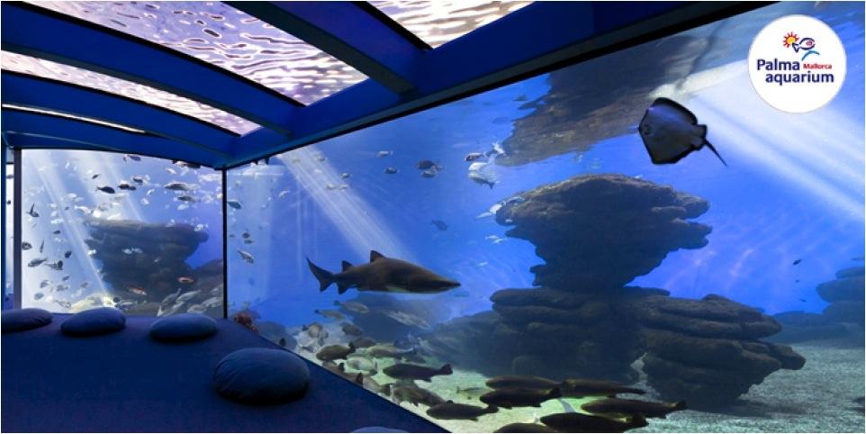 Palma Aquarium, Palma de Mallorca, Barnaktivitet, fiskar
