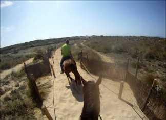 Hästridning, ridning på Mallorca, hästar