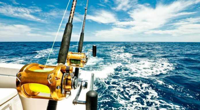 Fiske, Fiska, Djuphavsfiske, Mallorca, Hamnar, tonfisk, trolling