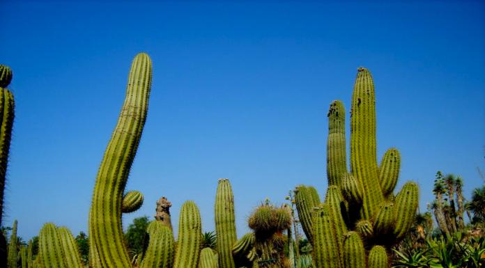 Botanicactus Mallorca