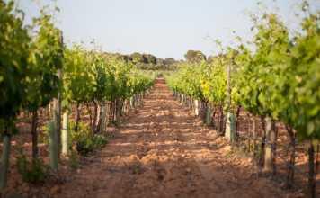 bodegas bordoy Mallorca